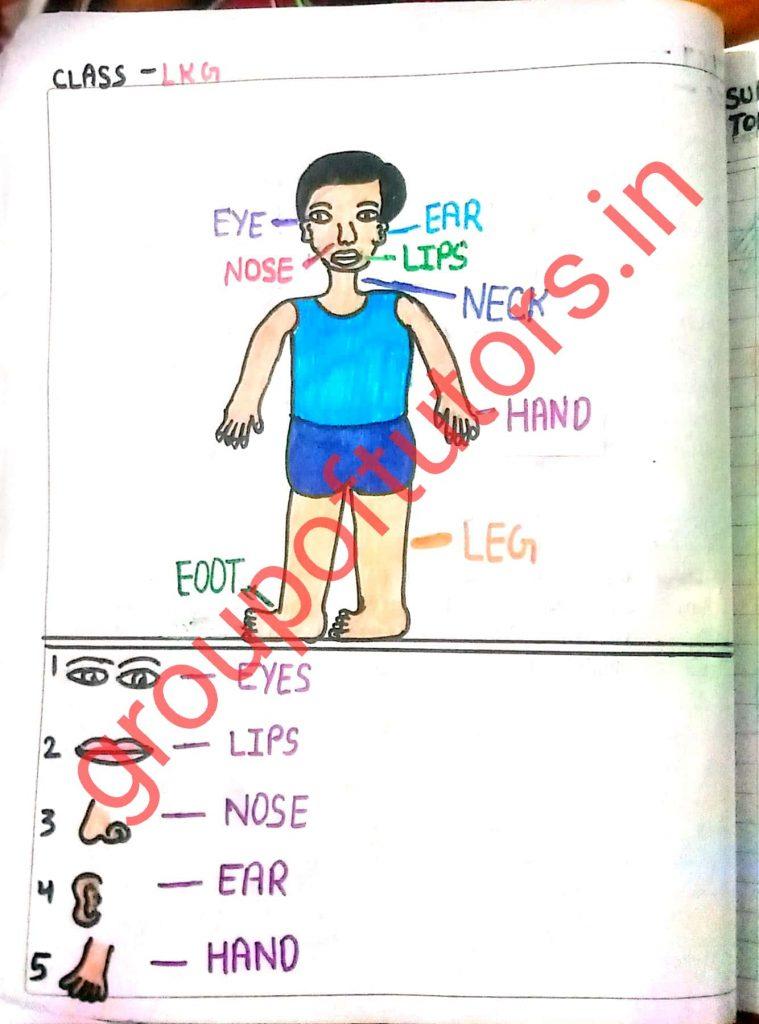 EVS lesson plans